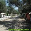 Altınoluk Çadır Kamp Ege Öğretmenler