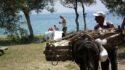 Altınoluk Deniz Kamp