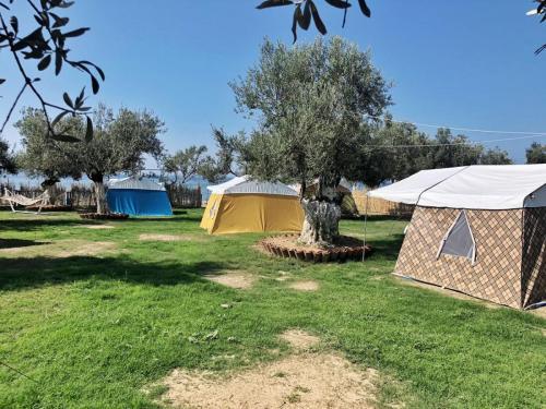 barbaros camping8