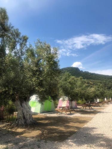 zeus beach camping1